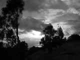 Berkeley Hills, overlooking SF Bay - m042103-21-bw-rgb
