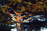 Tree at Fort Mason, San Francisco