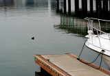 Bird in tranquil waters of the waterfront