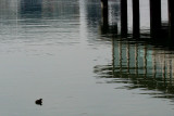Modified by Tanya for focus on bird and water