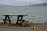 Twerps by bench and not-Golden Gate Bridge