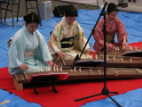 Koto performance at Tagata-jinja