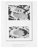 Tafel 9 - Casatus, Klaproth / Blancanus
