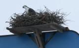 ...nest platform...