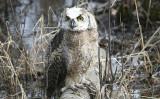 ...Owlet rescue..
