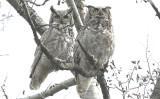 ...Mr & Mrs. GHO...