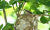 ...on the nest...