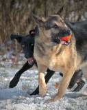 Big Mean Dog