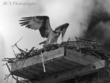 IR Osprey