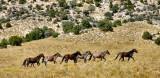 Mustang Territory
