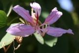 Botanical garden on Kitchener Island