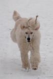 L Bonnie i snön 2.jpg