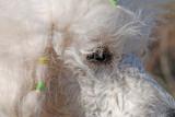 Bonnie profil.jpg