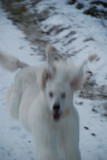 So Bonnie, out of focus and on the run!
