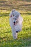 bonnie on the run 2007 700.jpg
