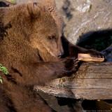 bearcub and bone 900.jpg