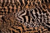 peacock detail 2 700.jpg