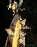moths on banana