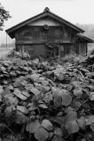 lakehouse in the rain 1