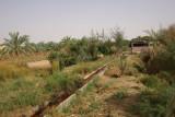Spring at Dakhla Oasis