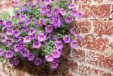 Flower Wall Hanging.jpg