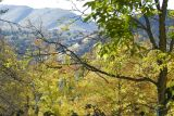 Autumn Scene at Pocatello Zoo _DSC0868.JPG