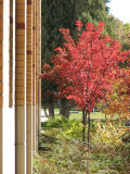 Autumn Scene next to the Physical Sciences Bldg ISU smallfile IMG_1494.jpg