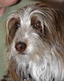 Dog _DSC0937.jpg