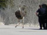 Bird and Cop P1010095.jpg