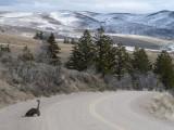 Bergszene mit dem großen Vogel P1010078.jpg