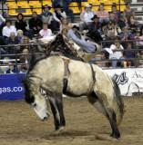 Rodeo 2007 _DSC0135.jpg