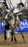 Rodeo 2007 _DSC0128.jpg