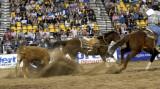 rodeo 2007 _DSC0262.jpg