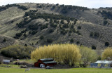 Country Scene with Spring Foliage, Red Barn, and White Horse _DSC0005.jpg