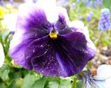 Trimmers Flowers 2007 P1010291.JPG