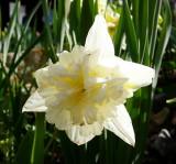Trimmers Flowers 2007 P1010293.JPG