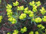 Trimmers' flowers2007 IMG_3039.jpg