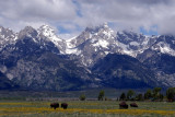 Bison and Tetons from Antelope Flats Road _DSC0187_2.jpg