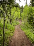 East Fork Mink Creek Trail Scout Mtn P1010481.jpg