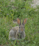 bunny front view cropped smallfile  _DSC0540.jpg