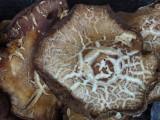 Pocatello Myco P1030153.jpg