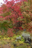 First Official Day of Autumn _DSC0060.jpg