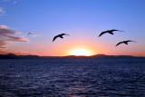 Lindeman Island - QLD, Australia