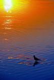 Bird in the Sunset