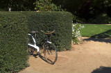 Old Bicycle in hedge