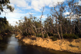 Echuca River Bank