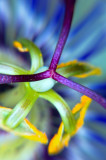 Photo of the Day- 6th April 2007At Digitalimagecafe.comMacro / Abstract CategoryPhoto of the Day27th December 2005Cover Image atAustralian Digital Photo Of The Day Competitions December 2005 Featured Category: Macro/abstract Photo of the Month- Encouragement Award December 2005Australian Digital Photo Of The Day Competitions