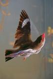 bird at the window ~*