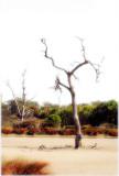 dead trees ~
