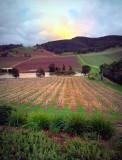 Fields in the yarra valley ~
